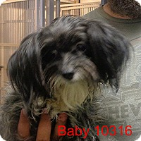 Adopt A Pet :: Baby - Greencastle, NC