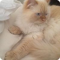 Adopt A Pet :: Finn - Brooklyn, NY