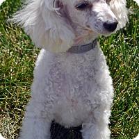 Adopt A Pet :: Tegan - Bridgeton, MO