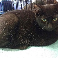 Adopt A Pet :: Jasmine - Seminole, FL