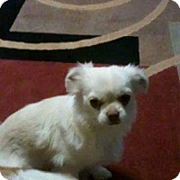 Adopt A Pet :: Carly - Ogden, UT