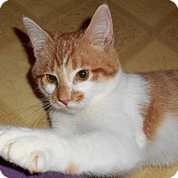 Adopt A Pet :: Lionel - Chattanooga, TN