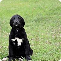 Adopt A Pet :: Kimmie - Groton, MA