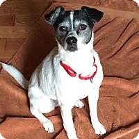 Adopt A Pet :: Rosie - St. Charles, IL