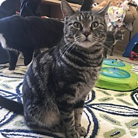 Adopt A Pet :: Lolly - Temecula, CA