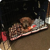 Adopt A Pet :: Alex - Brooklyn Center, MN