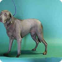 Adopt A Pet :: QUINNY - Salt Lake City, UT