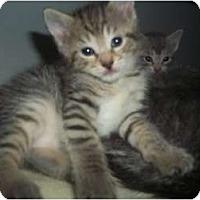 Adopt A Pet :: noLIESstill here - Little Neck, NY