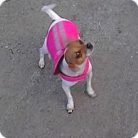 Adopt A Pet :: Pee Wee - San Francisco, CA