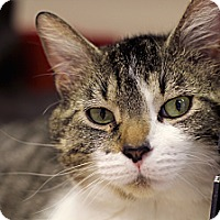 Adopt A Pet :: John Dorian - Chicago, IL