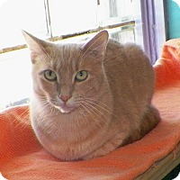 Adopt A Pet :: Ed - Dover, OH