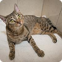 Adopt A Pet :: Lena - New York, NY