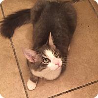 Adopt A Pet :: Petey - Scottsdale, AZ