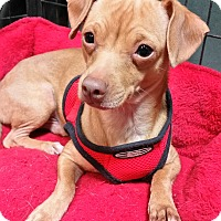 Adopt A Pet :: Hunter - Houston, TX