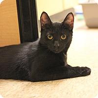 Adopt A Pet :: Iago - Carlisle, PA