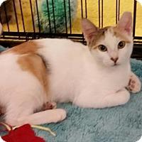 Adopt A Pet :: Nadia - Hallandale, FL