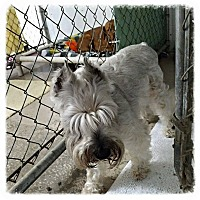 Adopt A Pet :: Harley - New Richmond,, WI