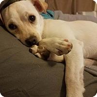Adopt A Pet :: Taylor - Chandler, AZ