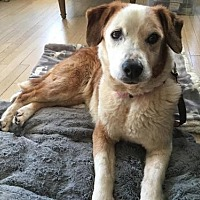 Adopt A Pet :: Mabel(Courtesy Post) - Asheville, NC