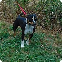 Adopt A Pet :: Lady Mae - Seattle, WA