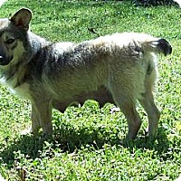 Adopt A Pet :: Bella - Chattanooga, TN