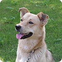 Adopt A Pet :: Spike - Rigaud, QC