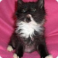 Adopt A Pet :: May - Richmond, VA