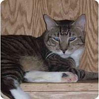 Adopt A Pet :: Maxie - Bedford, MA