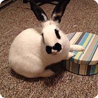 Adopt A Pet :: Korbyn - Williston, FL