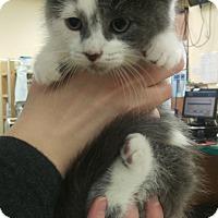 Adopt A Pet :: Teddy - Edmonton, AB