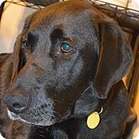 Adopt A Pet :: Ethel - Prole, IA