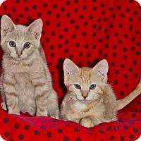 Adopt A Pet :: Barney - Sunderland, ON