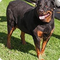 Adopt A Pet :: Katy - Rigaud, QC