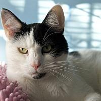 Adopt A Pet :: Oreo - LaGrange, KY