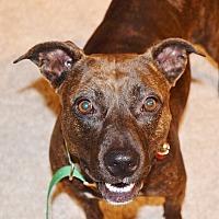Adopt A Pet :: Skye - Orlando, FL