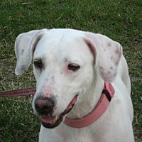 Adopt A Pet :: Hope - Royal Palm Beach, FL