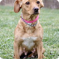 Adopt A Pet :: Peaches - Waldorf, MD