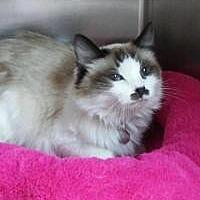 Adopt A Pet :: Taffy - Salt Lake City, UT