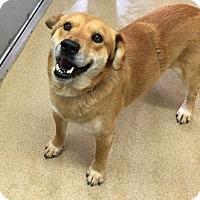 Adopt A Pet :: Alvin - Orleans, VT