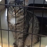 Adopt A Pet :: Macy - O Fallon, IL