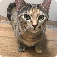Adopt A Pet :: Morgan - Southington, CT