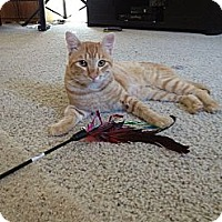 Adopt A Pet :: Justin - Modesto, CA