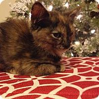 Adopt A Pet :: Mixie - McDonough, GA