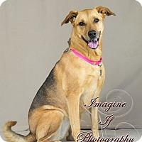 Adopt A Pet :: Maui - Newcastle, OK