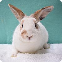 Adopt A Pet :: Starburst - Fountain Valley, CA