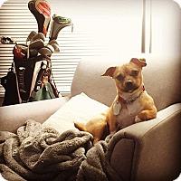 Adopt A Pet :: Kidada Jones - Jersey City, NJ