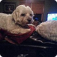 Adopt A Pet :: Miss Jody - Freeport, NY