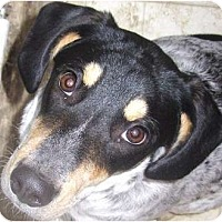 Adopt A Pet :: Hannah - Covington, KY