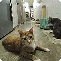 Adopt A Pet :: Patrick - House Springs, MO