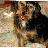Adopt A Pet :: Beau - Homer, NY